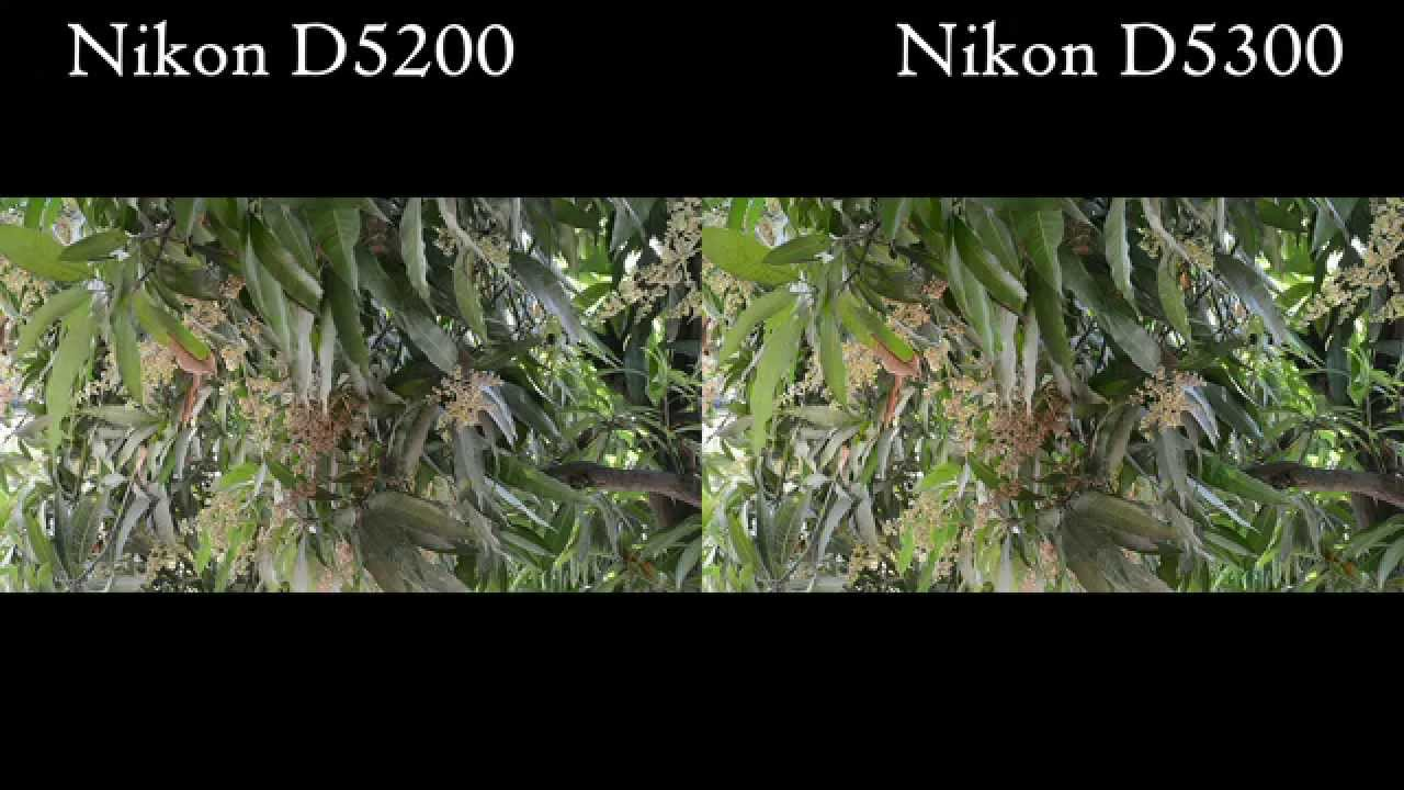 nikon d5300 how to use video